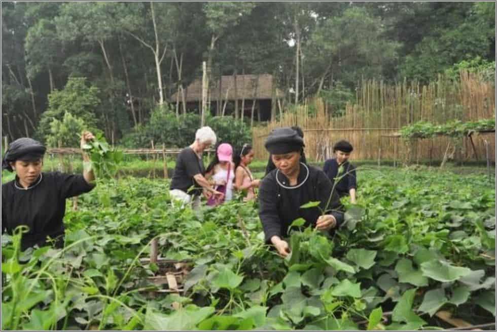 Farmstay kết hợp yếu tố du lịch cộng đồng 3