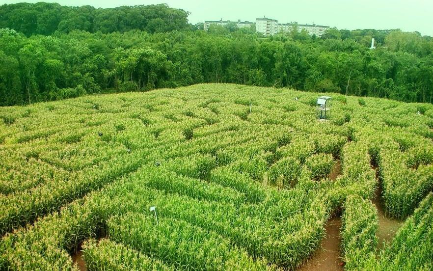 chiến lược phát triển farmstay