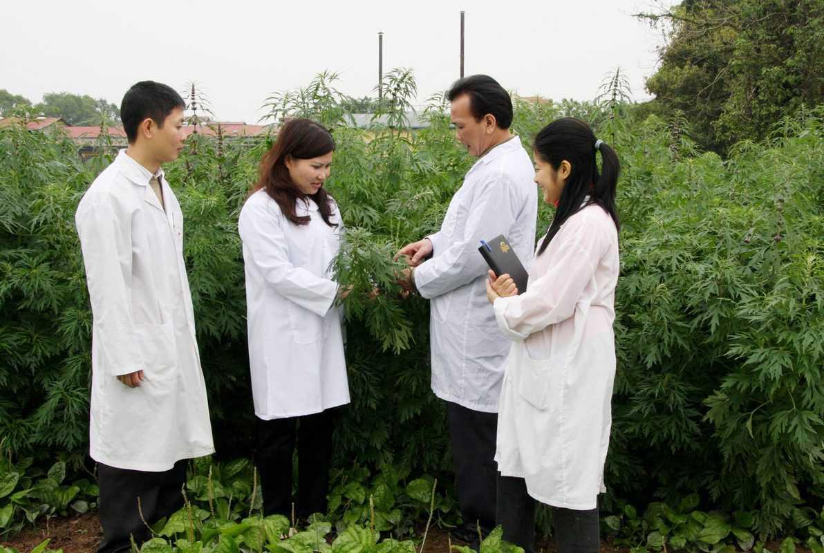 Mô hình Farmstay dược liệu