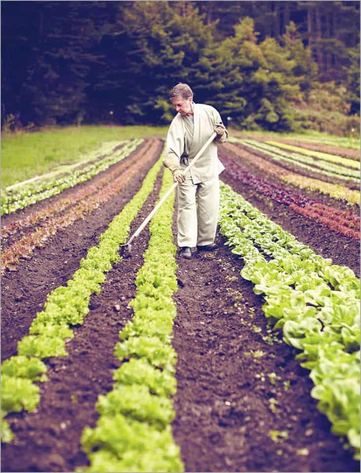 Khu trồng rau theo phương pháp hữu cơ của Farmstay
