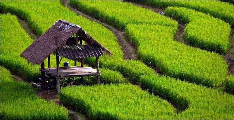 Du lịch nông nghiệp ở Việt Nam