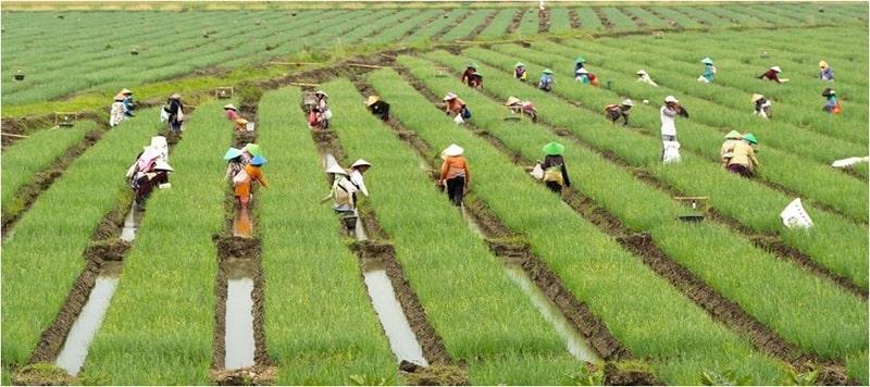 Mô hình du lịch nghỉ dưỡng ở Việt Nam