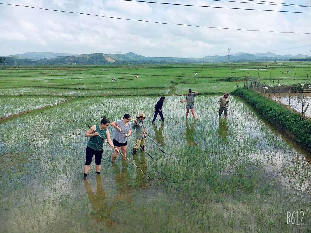 cộng tác viên farmstay