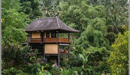 thiết kế farmstay sử dụng cây cối bản địa