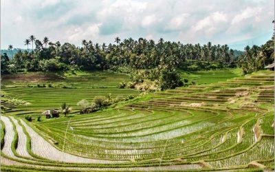 đầu tư farmstay
